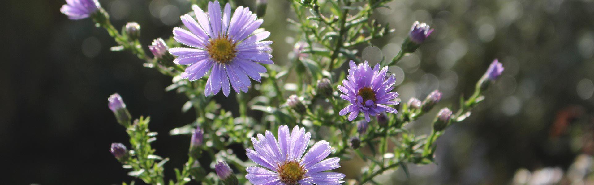 Blumen Rössl in Landshut