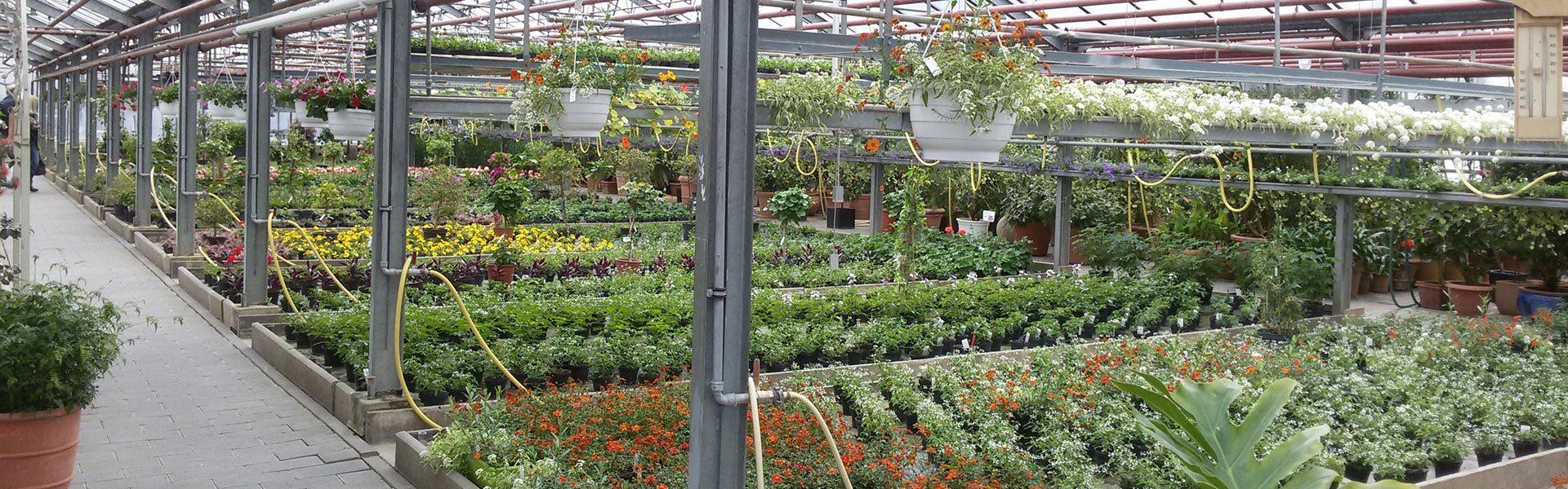 Gewächshaus von Blumen Rössl