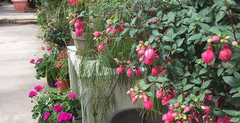 Pflanzen im Gewächshaus überwintern